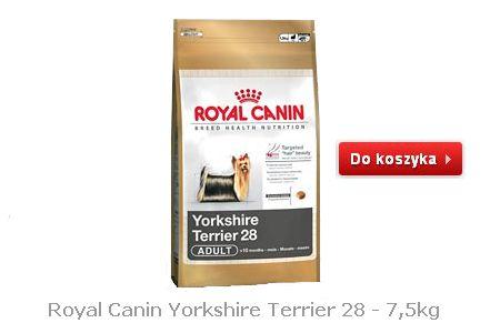Tania karma dla psów Yorkshire Terier